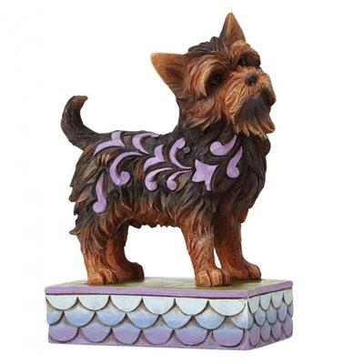 Izzie (Yorkshire Terrier)