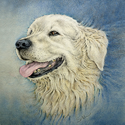 Kaart Golden Retreiver